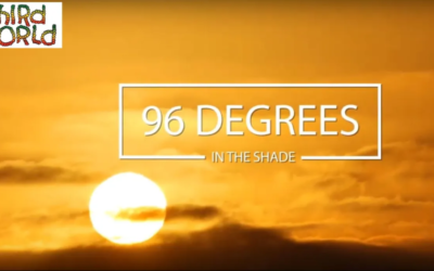 96 Degrees in the Shade THIRD WORLD BAND